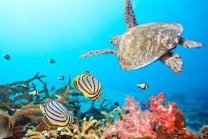 Zdjęcie Oceanografia