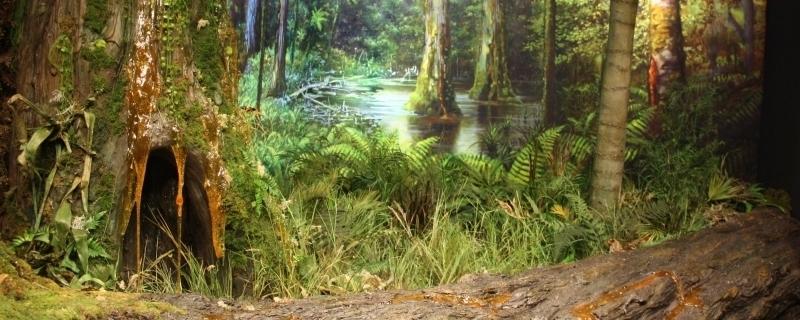 Las bursztynowy