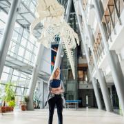Wydział Biologii, podwieszony szkielet Płetwala Błękitnego