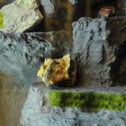 Wystawa poświęcona bursztynowi i inkluzjom, które od lat są tematem badań w pracowni Muzeum Inkluzji w Bursztynie w Katedrze Zoo
