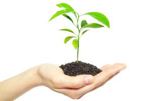 Roślinka w dłoni